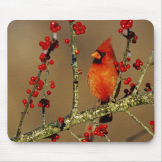 Northern Cardinal male perched, IL Mouse Pad