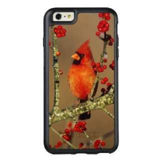 Northern Cardinal male perched, IL OtterBox iPhone 6/6s Plus Case
