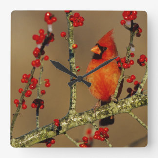 Northern Cardinal male perched, IL Wall Clock