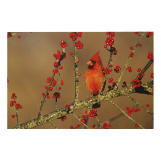 Northern Cardinal male perched, IL Wood Prints