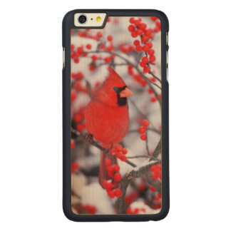Northern Cardinal male, Winter, IL Carved® Maple iPhone 6 Plus Case