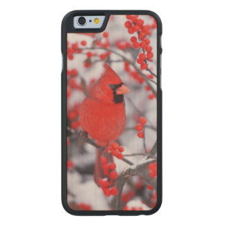 Northern Cardinal male, Winter, IL Carved® Maple iPhone 6 Slim Case