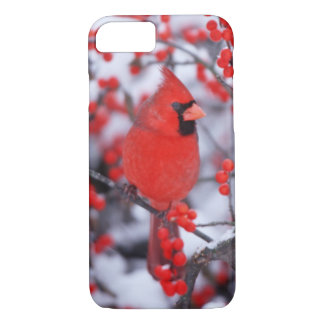 Northern Cardinal male, Winter, IL iPhone 7 Case