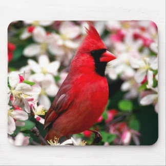 Northern Cardinal Mouse Pad