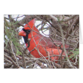 Northern Cardinal Note Card