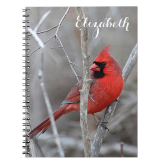 Northern Cardinal Notebooks