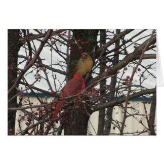 Northern Cardinal Pair Card