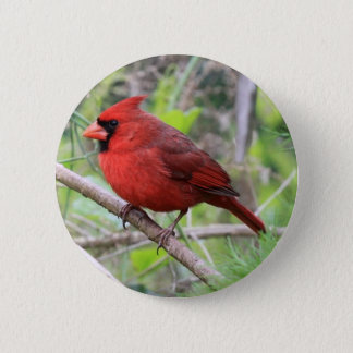 Northern Cardinal Photo 2 Inch Round Button