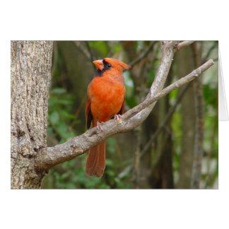 Northern Cardinal Profile Red Bird Card