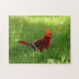 Northern Cardinal, Puzzle. Jigsaw Puzzle