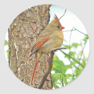 Northern Cardinal Red Bird Sticker