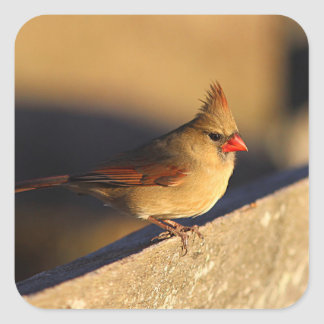 Northern Cardinal Square Sticker