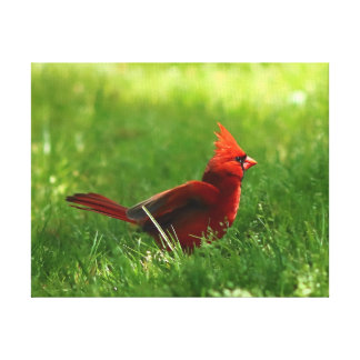 Northern Cardinal, Wrapped Canvas Print.