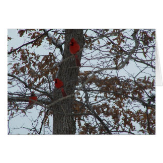 Northern Cardinals/Bright Spots Card