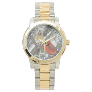 Northern Cardinals Watch