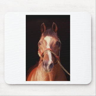 Northern Dancer Up Close & Personal! Mouse Pad
