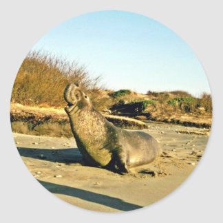 Northern Elephant Seal, Adult Male Classic Round Sticker