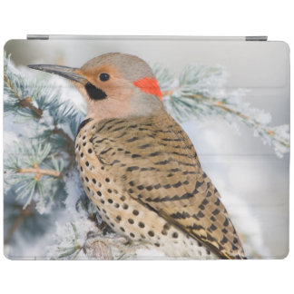 Northern Flicker on Blue Atlas Cedar iPad Cover