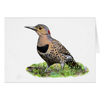Northern Flicker on the Ground Card