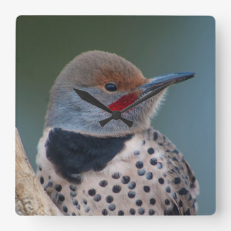 Northern Flicker Red Shafted Male Woodpecker Wall Clocks