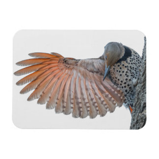 Northern Flicker Small Magnet