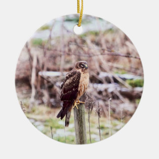 Northern Harrier Hawk on Fence Ceramic Ornament