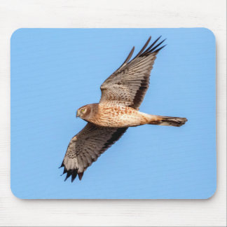 Northern Harrier in Flight Mouse Pad