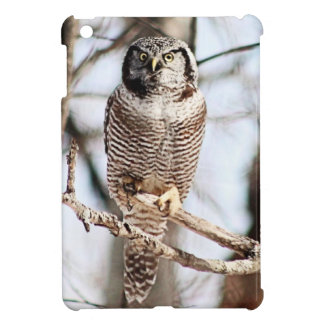 Northern Hawk Owl 3 Cover For The iPad Mini