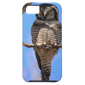 Northern Hawk Owl 4 iPhone 5 Cases
