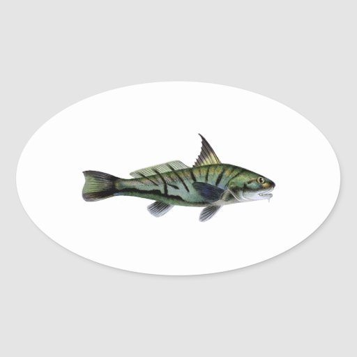 Northern Kingfish - Roundhead - Whiting Oval Sticker
