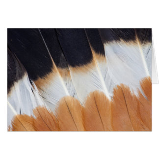 Northern Lapwing Feather Abstract Card