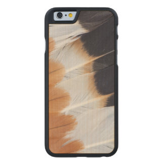Northern Lapwing Feather Abstract Carved Maple iPhone 6 Case
