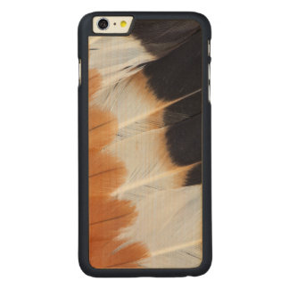 Northern Lapwing Feather Abstract Carved Maple iPhone 6 Plus Case