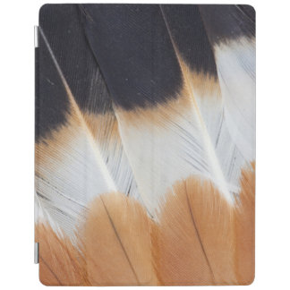 Northern Lapwing Feather Abstract iPad Cover
