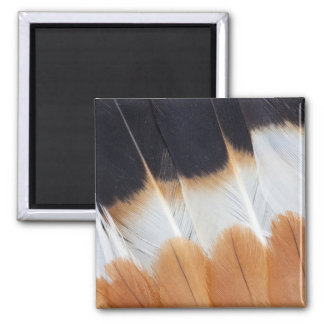 Northern Lapwing Feather Abstract Magnet