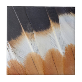 Northern Lapwing Feather Abstract Tile