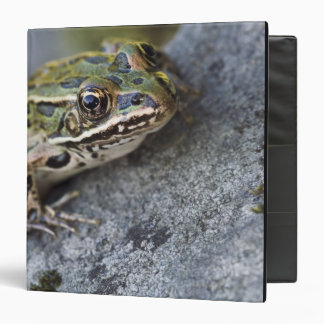 Northern Leopard frog, See-through Island, Binders