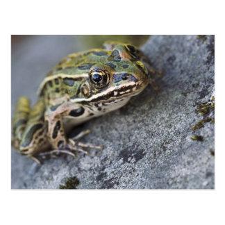Northern Leopard frog, See-through Island, Postcard