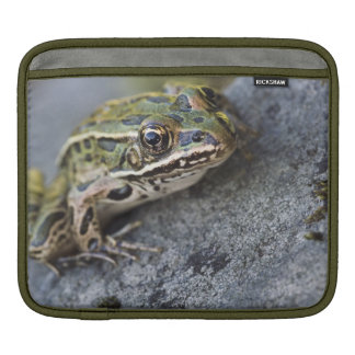 Northern Leopard frog, See-through Island, Sleeve For iPads