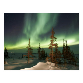 Northern Lights Canada Postcard