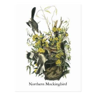 Northern Mocking Bird, John Audubon Postcard