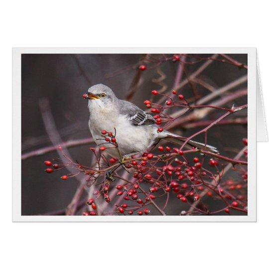 Northern Mockingbird Card