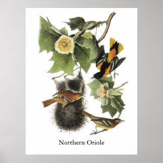 Northern Oriole, John Audubon Poster