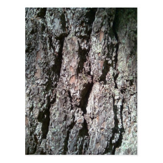 Northern Pine Tree Bark Postcard