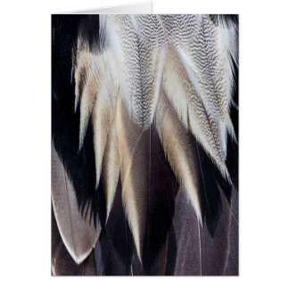 Northern Pintail Duck feather Card