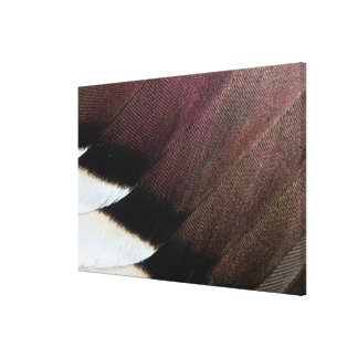 Northern Pintail Feather Abstract Canvas Print