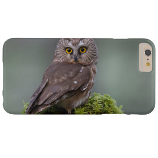 Northern Saw Whet Owl Barely There iPhone 6 Plus Case