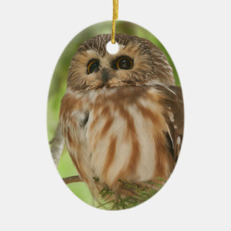 Northern Saw-whet Owl Ceramic Oval Ornament