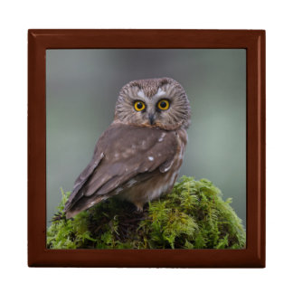 Northern Saw Whet Owl Gift Box