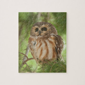 Northern Saw-whet Owl Jigsaw Puzzle